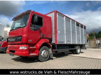 DAF LF 55 Einstock KABA  - transporte de ganado camión