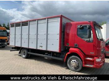 DAF LF 55 Einstock Köpf  - transporte de ganado camión