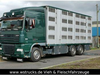Ciężarówka do przewozu zwierząt DAF XF105/410 Spacecup Menke 4 Stock
