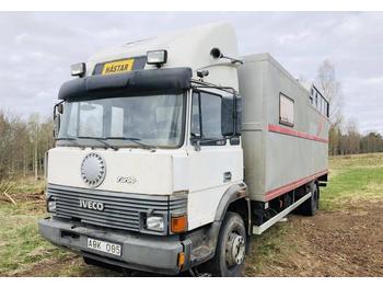 Iveco 145-17  - ciężarówka do przewozu zwierząt