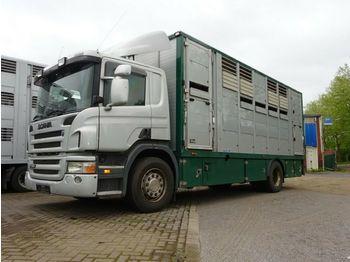 Scania P 380 mitt Menke Doppelstock  - ciężarówka do przewozu zwierząt