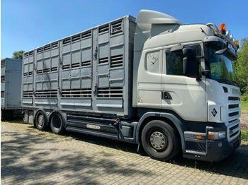 Scania R 440 Highline  3 Stock Pezzaioli  - ciężarówka do przewozu zwierząt