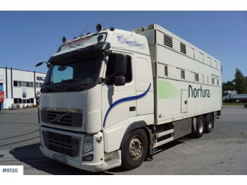 Volvo FH16 - ciężarówka do przewozu zwierząt