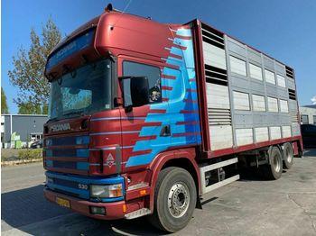 Kamion za prevoz stoke Scania R 144G-530 V8 6X2 MANUAL FULL STEEL