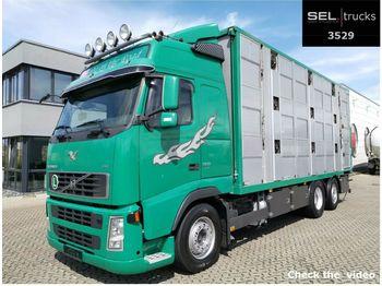 Volvo FH 520 6x2 / 3 Stock / German  - állatszállító teherautó