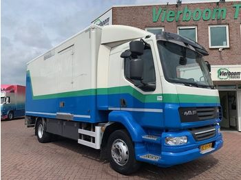DAF LF55-220 SLEEPING CABINE BOX WITH TAILLIFT - box truck