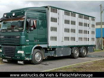 Livestock truck DAF XF105/410 Spacecup Menke 4 Stock: picture 1